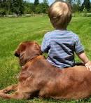 mascotas para los niños