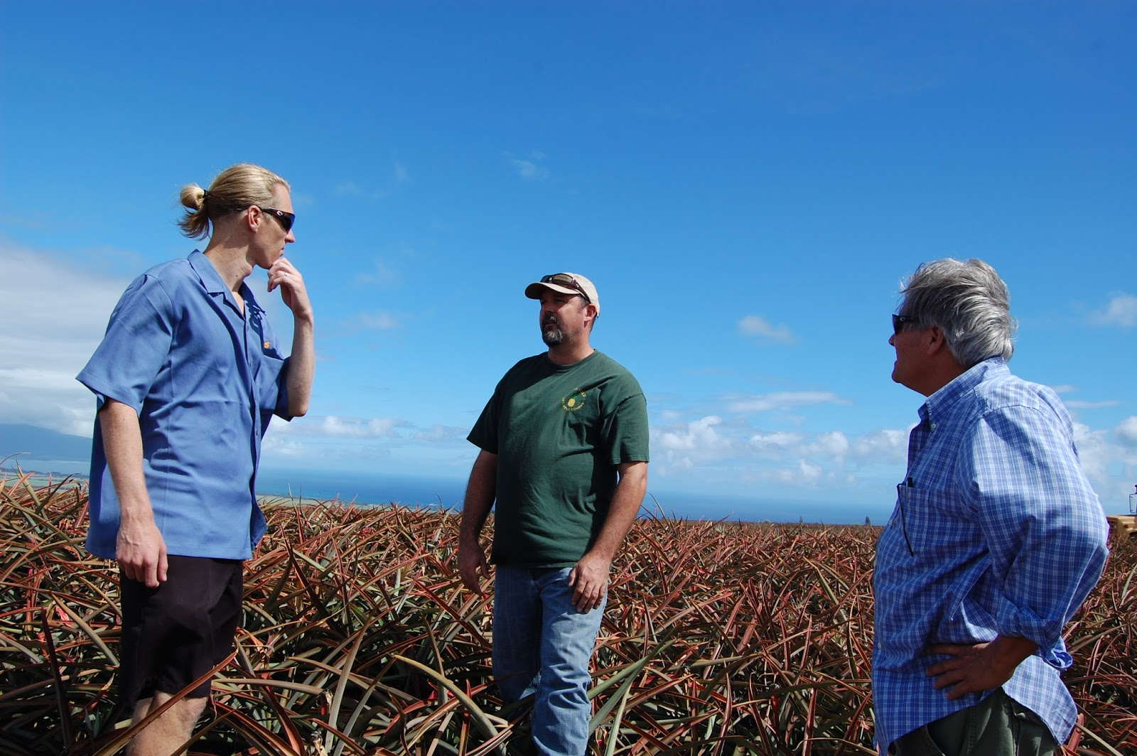 fa20d0b6944e9 IPO in Hawaii Summer of 2014 visiting Maui Land and Pineapple Fields now  Farmed by the Halemali Pineapple Company where the 73-50 (Maui Gold)  Pineapples are ...