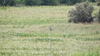 birding sierra de guara, rutas huesca