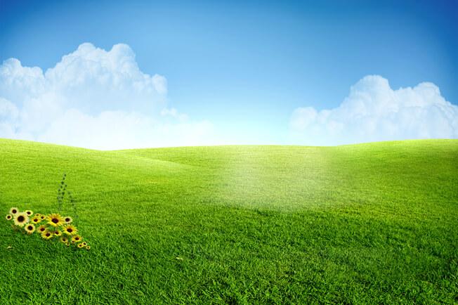 PSD Packgrounds free Download, تحميل خلفية مساحه خضراء مفتوحه وسماء صافيه للفوتوشوب, PSD Grass Sunflower Clear Sky,