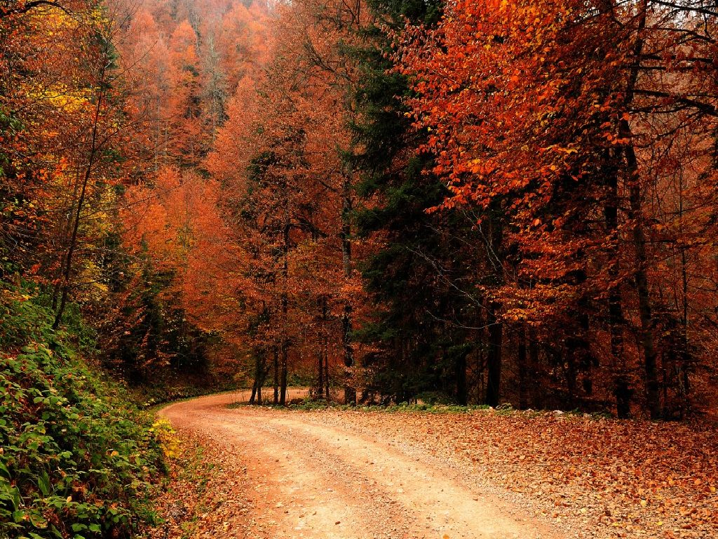 Wallpapers: Autumn , Fall, nature, nature wallpapers, popular,