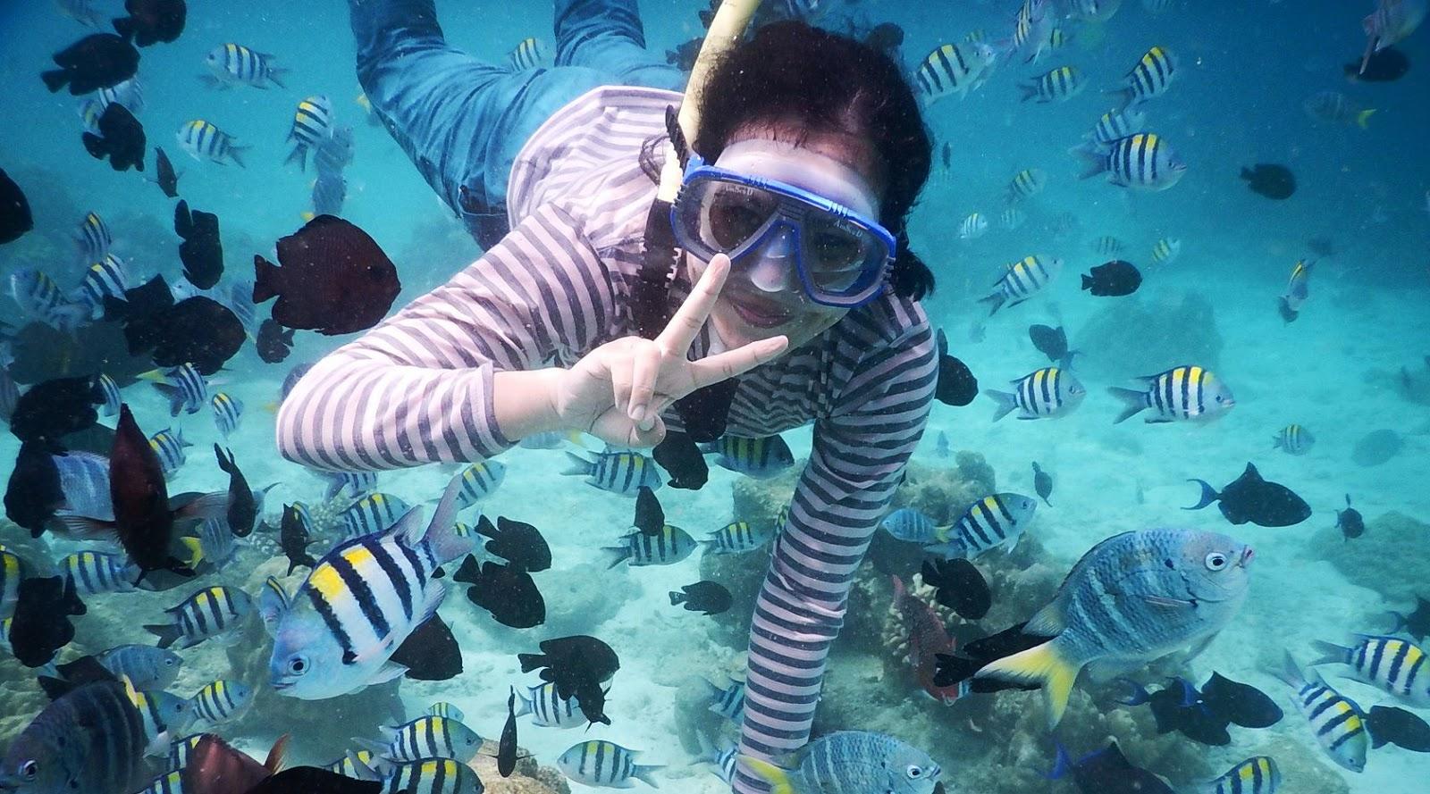 Ikan laut baronang di pulau Rubah Indonesia