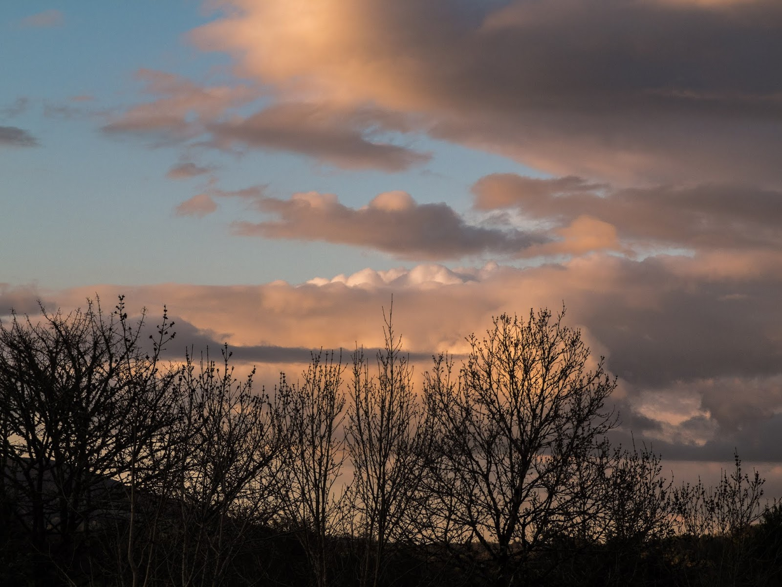 Deciduous tree branches with big light pink sunset clouds in the mountains.