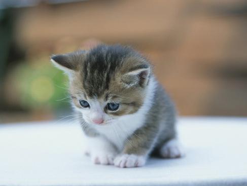 Foto Kucing Kecil Lucu Majalah Cat Dog