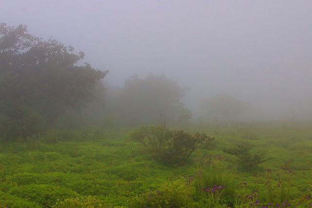 kaas plateau western ghats valley of flowers