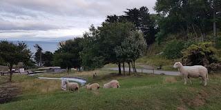 Toboggan run on the Great Orme in Llandudno