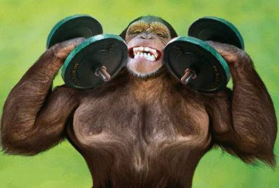 Frugal Finance Bench Press Monkeys Amp Youtube Trolls