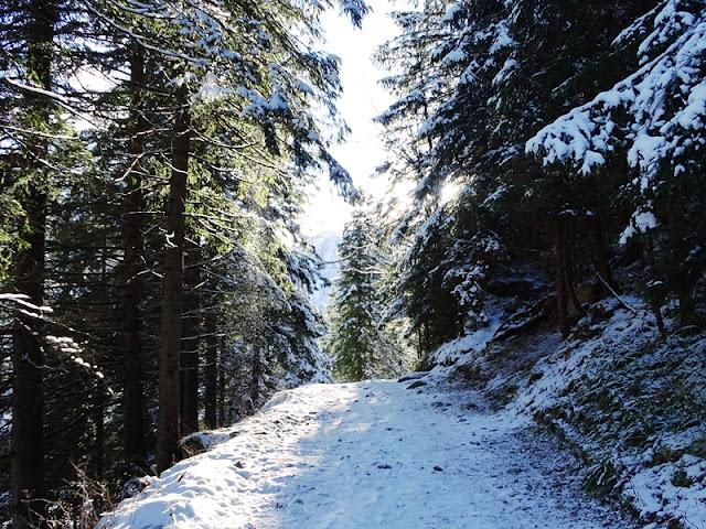 Początek trasy do Dolin Jaworzynki