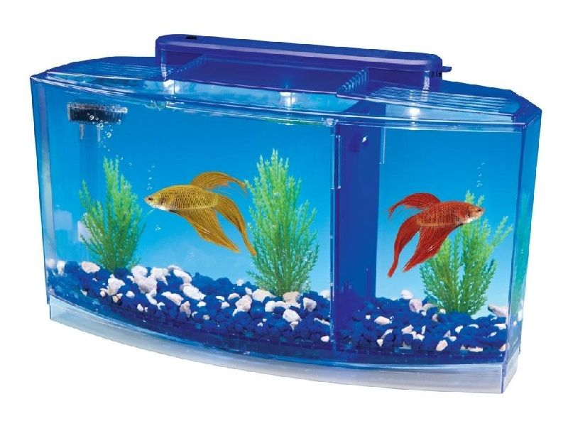 Image What You Don't Know About Betta Fish Tank Amazon