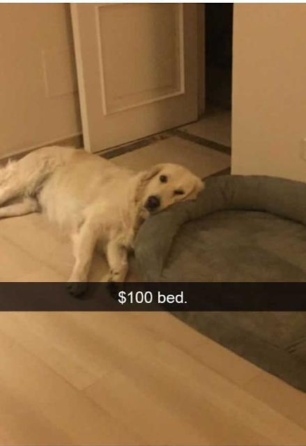 Cute Dog Memes Viral Online 3