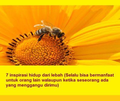 7 inspirasi hidup dari lebah (Selalu bisa bermanfaat untuk orang lain walaupun ketika seseorang ada yang menggangu dirimu)