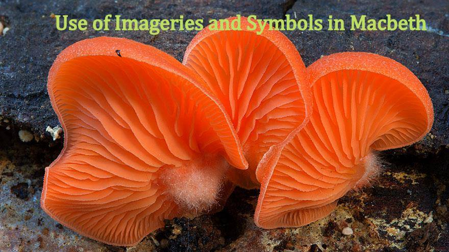 Use Of Imageries And Symbols In Shakespeares Macbeth All About