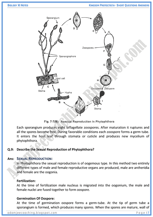 kingdom-protista-protoctista-short-question-answers-biology-11th
