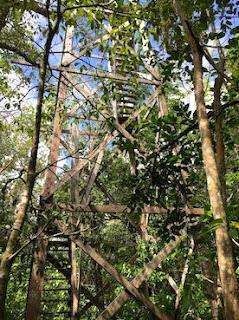 Tour d'observation, réserve de Sian Ka'an, Yucatan, Mexique