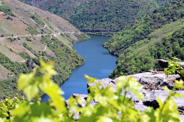 ribeira-sacra-camino-de-santiago-de-invierno-rio-sil-hojas-vides