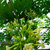 The Health Benefits Of Papaya Flower