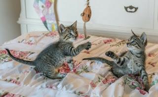 Cara Membuat Mainan Tikus Untuk Kucing