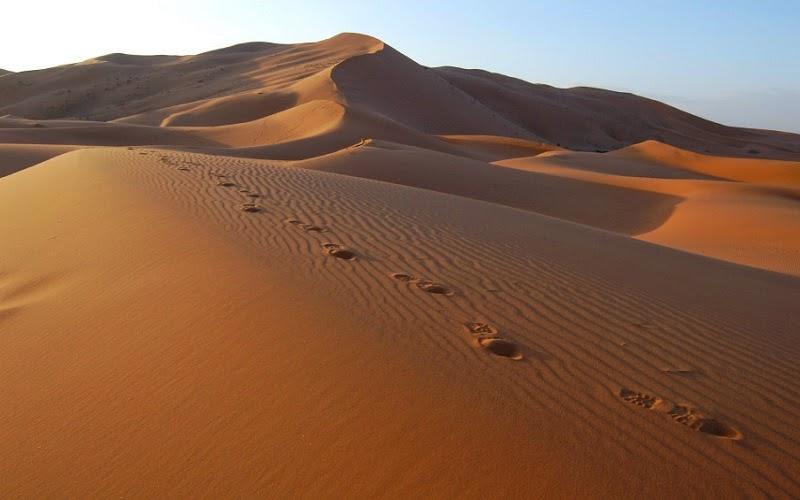 El desierto del Sahara o Sáhara es el desierto más cálido del mundo, y el tercer mayor desierto después de la Antártida y el Ártico. Con más de 9 065 000 km2 de superficie, abarca la mayor parte de África del Norte ocupando una extensión casi tan grande como la de China o los Estados Unidos.