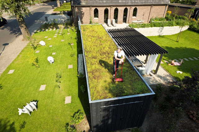 Picture of man mowing the grass on the roof of the terrace