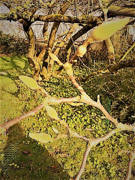 Prosa Lyrik Bilder Botanischer Garten Im Winter