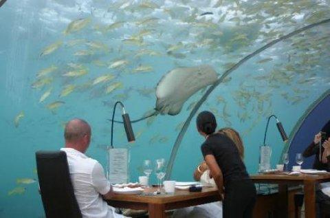 Resultado de imagem para restaurante Sea (Ilhas Maldivas)