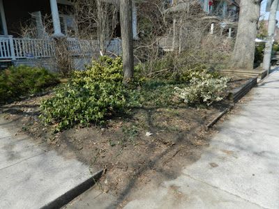 A Toronto Front Yard Spring Cleanup in Riverdale After by Paul Jung Gardening Services--a Toronto Organic Gardener