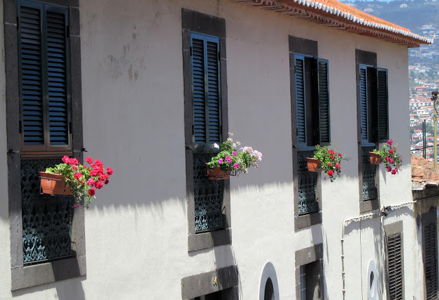 flowers in the windows