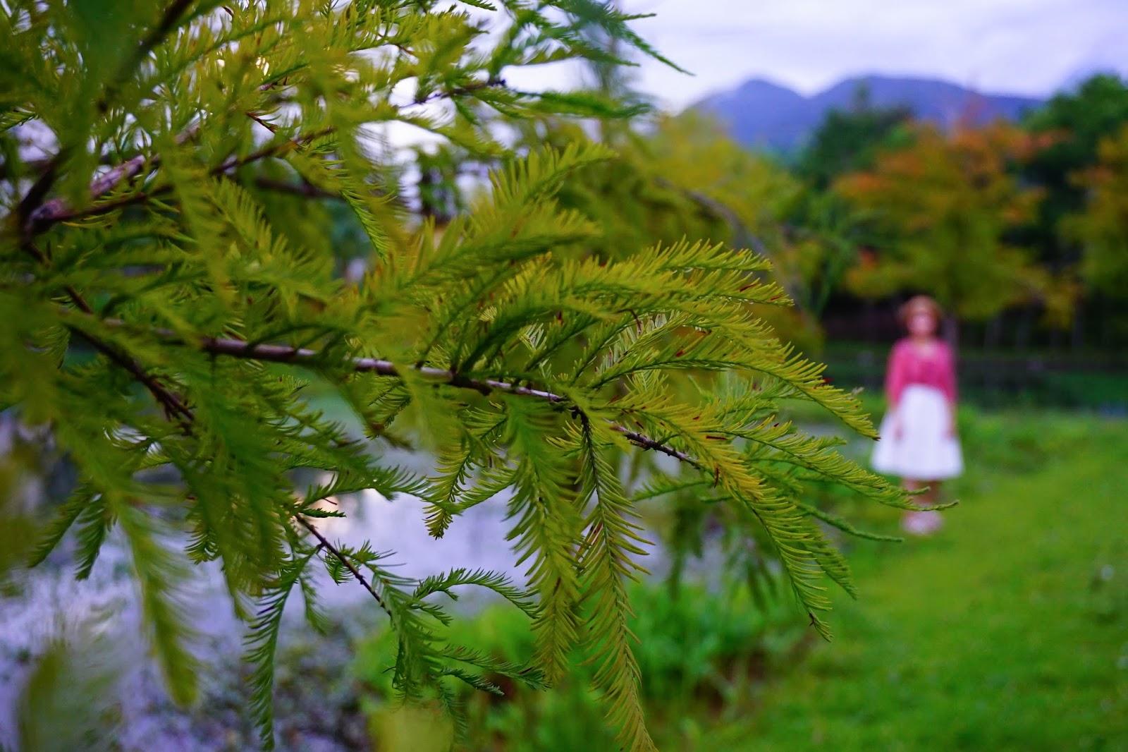 beautyanxiety.com-beautyanxiety.com-cultural-park-forest-DSC08888.jpg