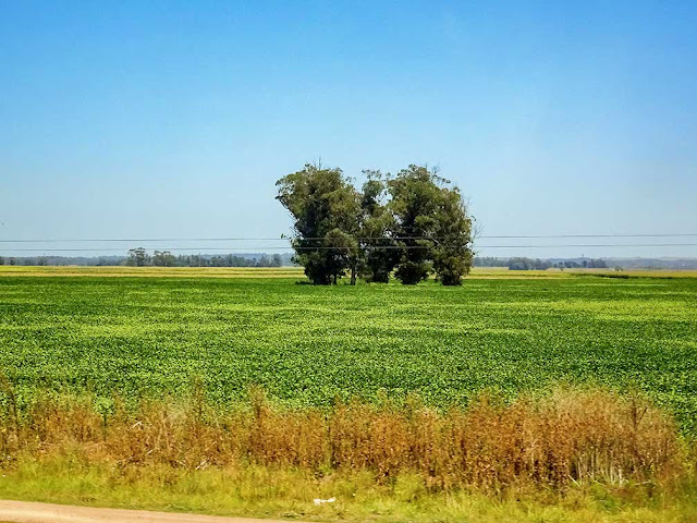 Paisaje campestre con árboles en medio del campo sembrado de verde