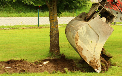 Trenching to sever grafted tree roots and prevent oak wilt disease from spreading