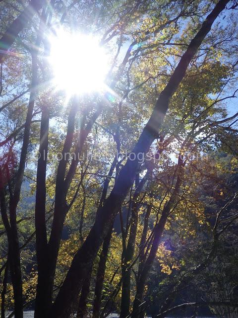 Taiwan Aowanda (奧萬大) maple season