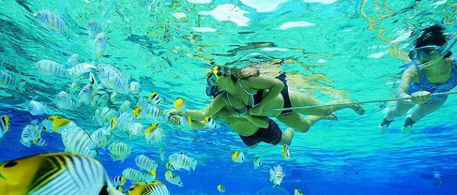 Snorkel in Koh Tao