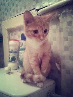 Фото маленького рыжего котенка