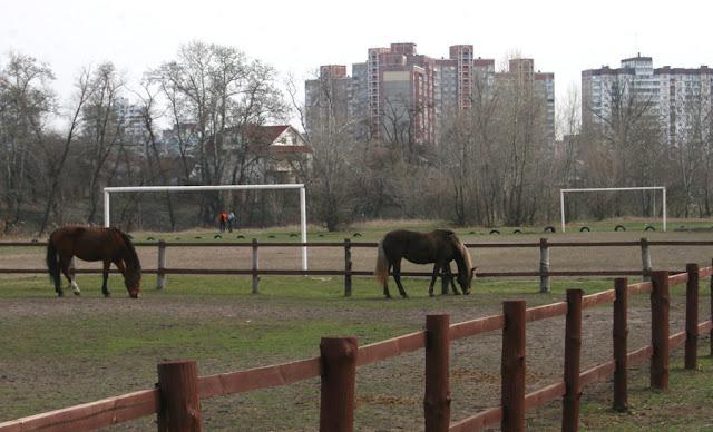 Фото Виталия Бабенко: кони