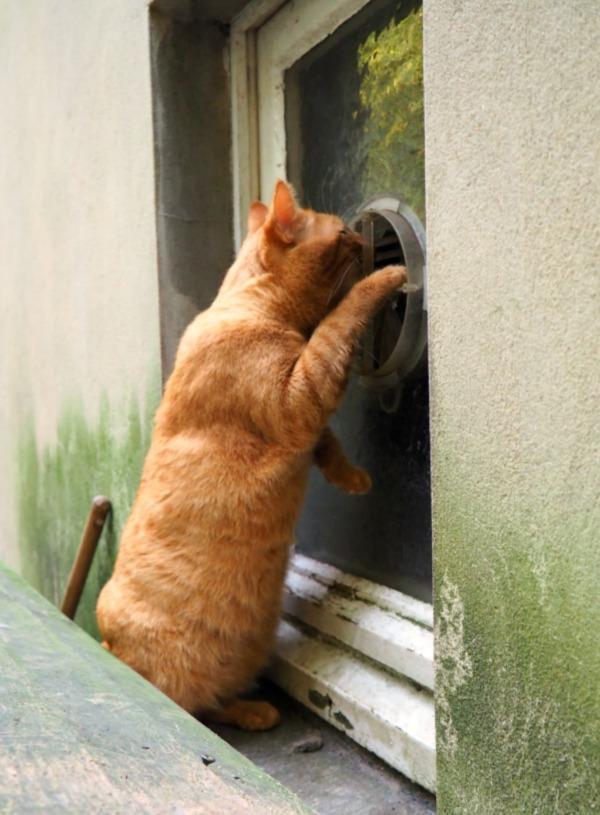 curious ginger cat