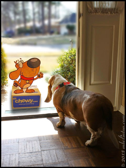 Basset answering door to Chewy.com mascot