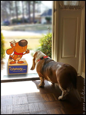 Chewy.com and Basset Hound at front door
