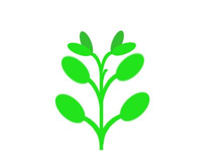 ハイグロフィラなどの対生の水草模式図(脇芽が生長)