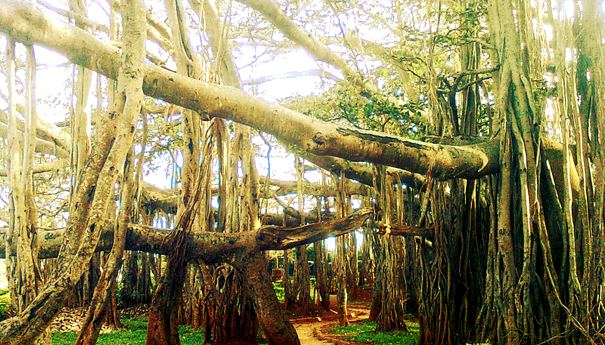 TOP 10 HAUNTED PLACES IN ODISHA | Haunted