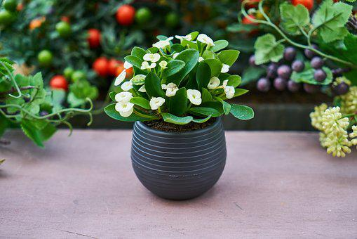 5 Amazing Health Benefits of House Plants