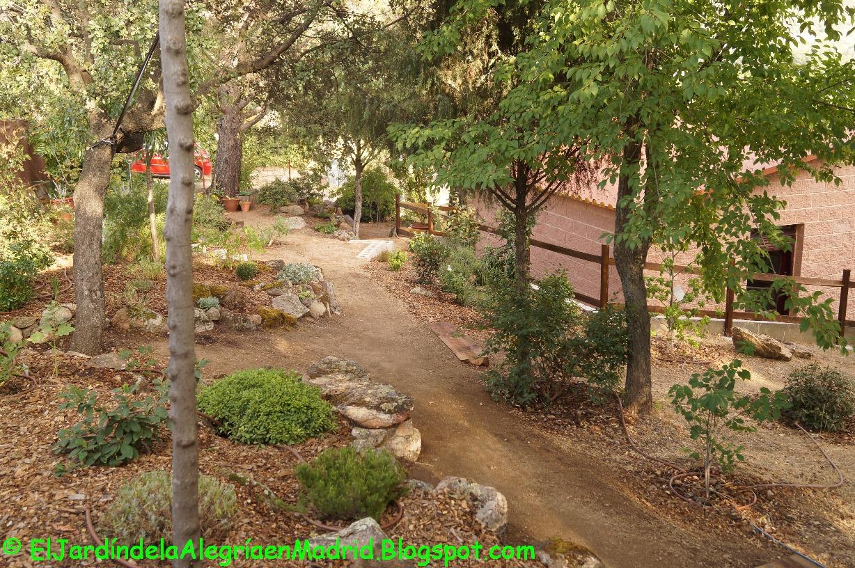 El jard n de la alegr a remodelaci n del camino del seto for Caminos de piedra en el jardin