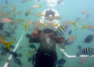 helmet dive with fish