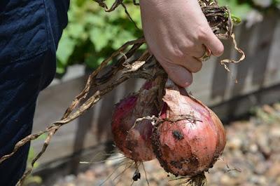 sayuran, makanan organik, organik, sayuran organik, budidaya organik, manfaat sayur organik, nutrisi sayuran organik,