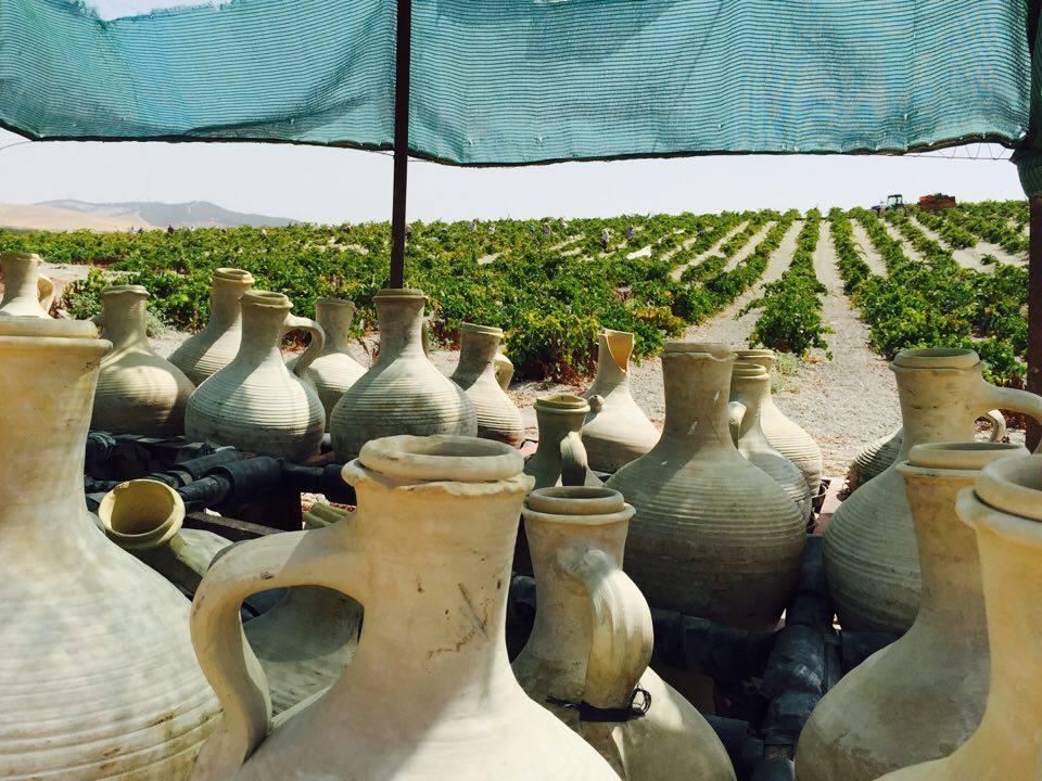 Pago del que sale el vino blanco de Barbadillo Mirabrás