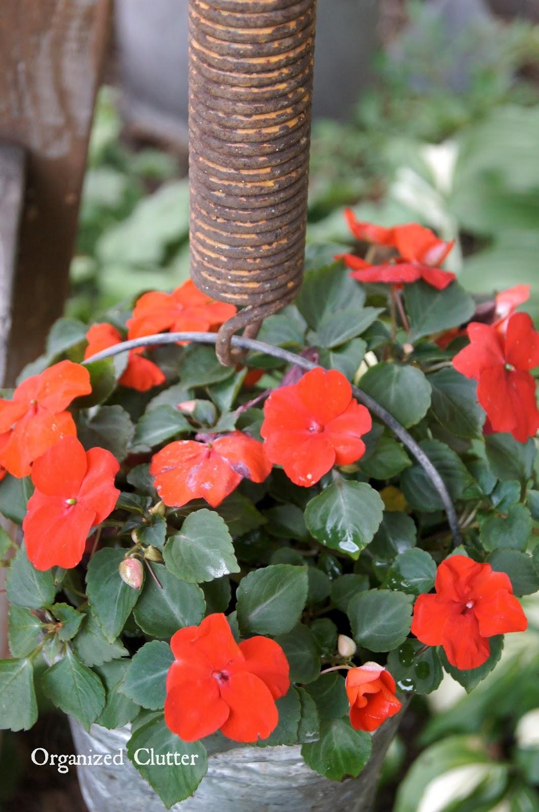 Rusty Spring Pail Hanger www.organizedclutterqueen.blogspot.com