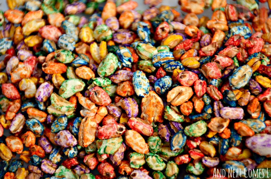 How to dye puffed wheat cereal for sensory play from And Next Comes L