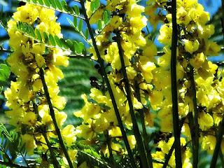 Flores no Alto de Árvore no Parque Saint Hilaire, Viamão