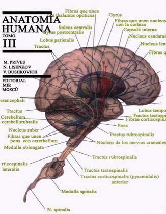 Anatomía humana, Tomo III: Angiología, neurología y estesiología – M. Prives