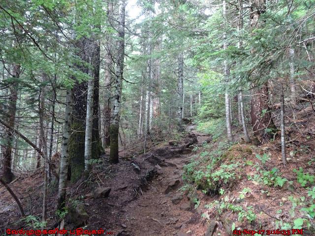 Bald Mountain Trail Oregon