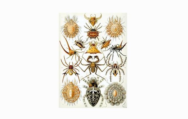 Pengertian dan Ciri Arachnida